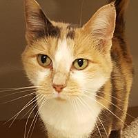 Adopt A Pet :: Florie - Grayslake, IL