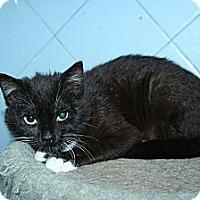 Adopt A Pet :: Magnolia - Santa Rosa, CA