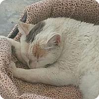 Adopt A Pet :: huntington - Corona del mar, CA