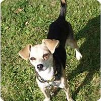 Adopt A Pet :: Mitsy - Toronto/Etobicoke/GTA, ON