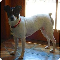 Adopt A Pet :: Mimi - Oklahoma City, OK