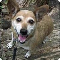 Adopt A Pet :: Lassie - Baltimore, MD