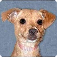 Adopt A Pet :: Sandy - New York, NY