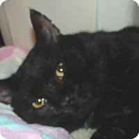 Adopt A Pet :: Hercules - Acme, PA