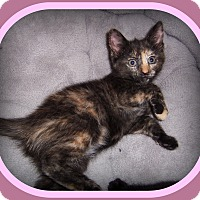 Adopt A Pet :: BRIANA - SUCH A SWEETHEART!! - South Plainfield, NJ