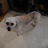 Adopt A Pet :: Sweet Pea - Bremo Bluff, VA