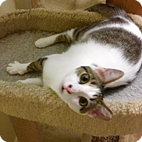 Adopt A Pet :: Genie - Hammond, LA