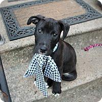Adopt A Pet :: Patrick-Adopted! - Detroit, MI