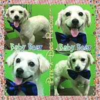 Adopt A Pet :: Baby Bear - South Gate, CA