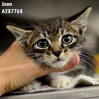 Adopt A Pet :: JEAN - Conroe, TX