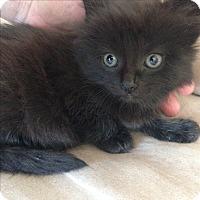 Adopt A Pet :: Lexie - Montreal, QC