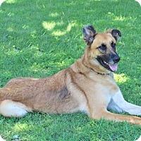 German Shepherd Dog Dog for adoption in Hagerstown, Maryland - HUDSON