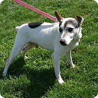 Adopt A Pet :: Jingles - Akron, OH