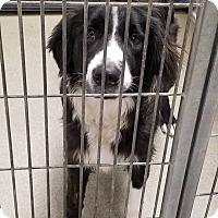 Adopt A Pet :: Mr Hamilton - Pittsburg, KS