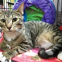 Adopt A Pet :: Devon - Oviedo, FL