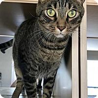Adopt A Pet :: Luis - West Palm Beach, FL