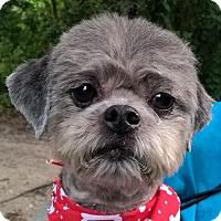 Adopt A Pet :: Zach - Orlando, FL