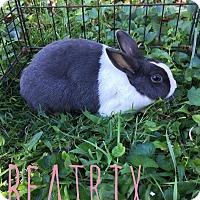 Adopt A Pet :: Beatrix - Elizabethtown, KY