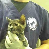 Adopt A Pet :: A291365 - Conroe, TX