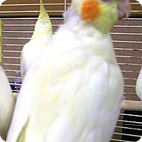 Adopt A Pet :: Mini - Lenexa, KS
