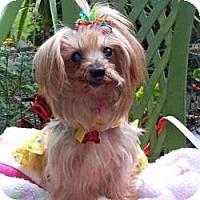 Adopt A Pet :: Millicent - Tallahassee, FL