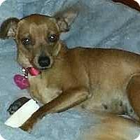 Adopt A Pet :: Phoebe - Columbus, OH
