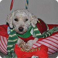 Adopt A Pet :: Pumpkin - Tumwater, WA