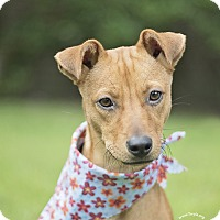 Adopt A Pet :: Sally - Kingwood, TX