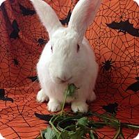 Adopt A Pet :: Johnie - Paramount, CA