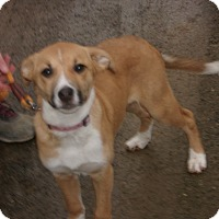 Adopt A Pet :: ALICE - Coudersport, PA