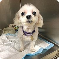 Adopt A Pet :: Baby Girl - Oak Ridge, NJ