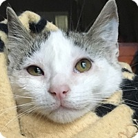 Adopt A Pet :: Chachi LC - Schertz, TX