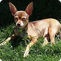 Adopt A Pet :: Catelyn - Pleasant Hill, CA