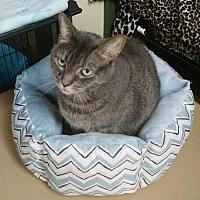 Adopt A Pet :: 1703-0973  Jamie Jojo - Virginia Beach, VA