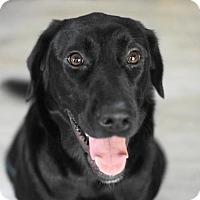 Adopt A Pet :: Devaki - Holly Springs, NC