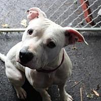 Adopt A Pet :: Kelis :) - Cuyahoga Falls, OH