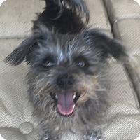 Adopt A Pet :: Lacie - Mandeville, LA