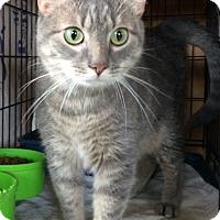 Adopt A Pet :: Rocky - Breinigsville, PA