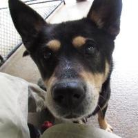 Adopt A Pet :: Hemlock - New Freedom, PA