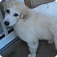 Adopt A Pet :: Thelma - Kyle, TX