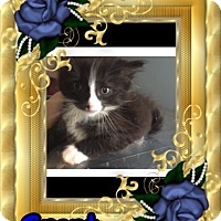 Adopt A Pet :: Grant - Brentwood, NY