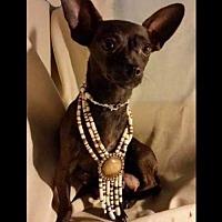 Adopt A Pet :: Anna - Longview, TX