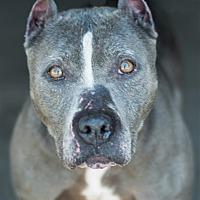 Adopt A Pet :: 17-07-2248 Tulip - Dallas, GA