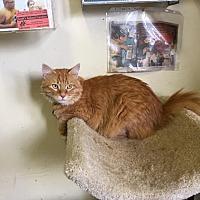 Adopt A Pet :: Zeus - St. James City, FL