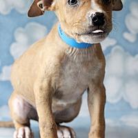 Adopt A Pet :: Zac - Waldorf, MD