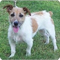 Adopt A Pet :: VENUS - Phoenix, AZ