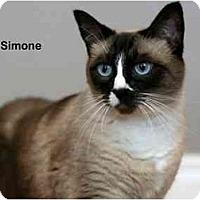 Adopt A Pet :: Simone - Portland, OR