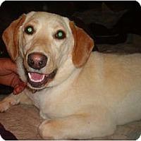 Adopt A Pet :: Kelsie - North Jackson, OH