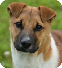 Collie/Terrier (Unknown Type, Medium) Mix Dog for adoption in Jacksonville, Arkansas - Jeep
