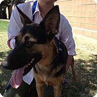 Adopt A Pet :: Liza - Fresno, CA